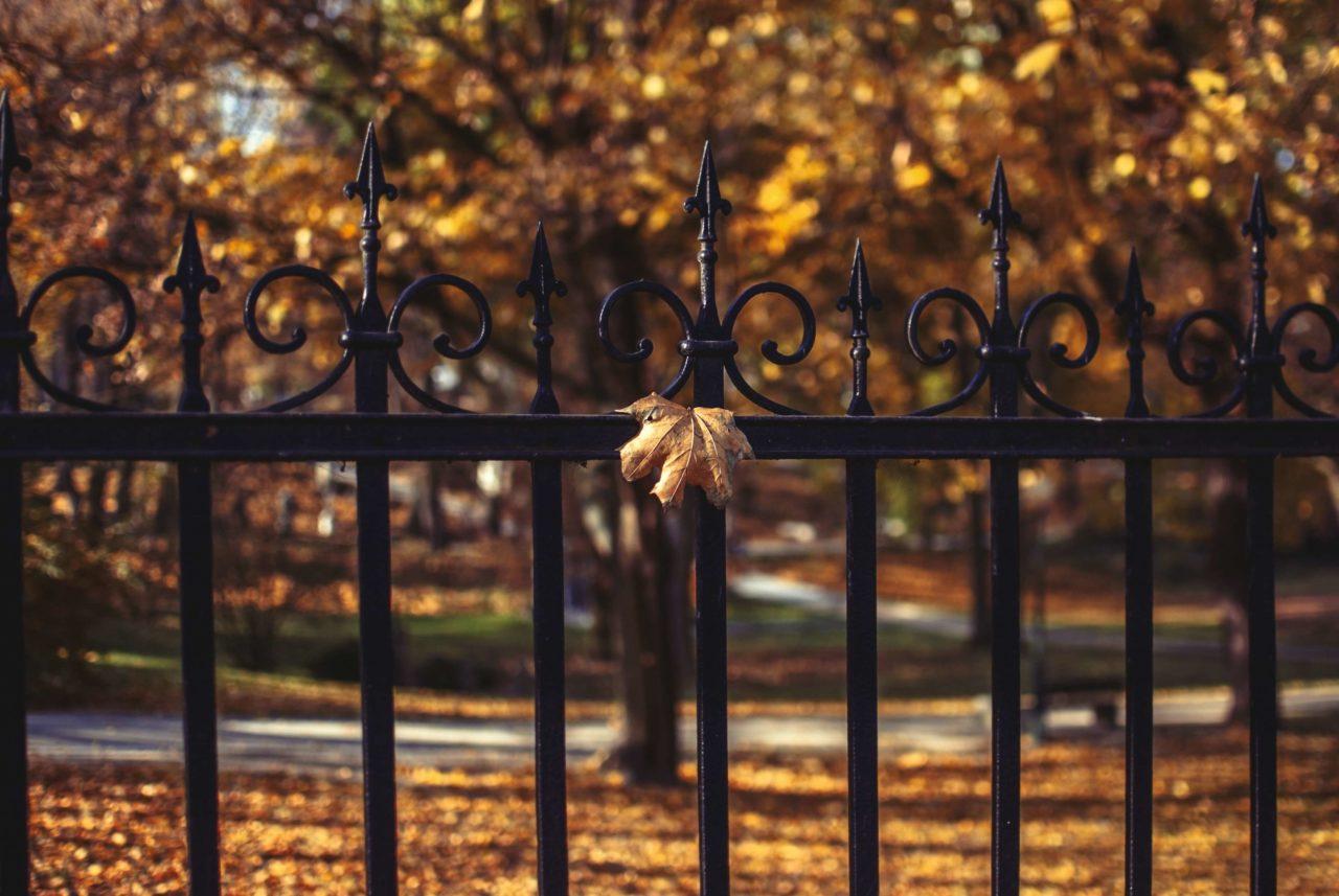 秋の夜長に、好奇心スイッチを押す
